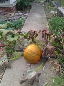 SidewalkPumpkin